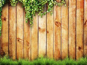 Bright Vibrant Timber Fence